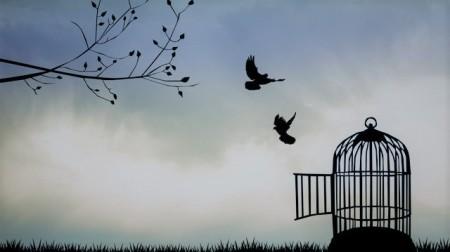 liberte-oiseaux 3